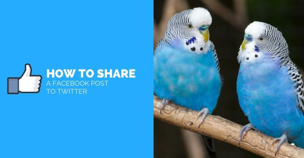 How To Share Facebook Posts On Twitter