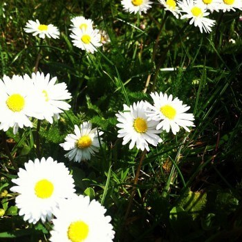 What Happens To Your Social Media When You're Pushing Up Daisies?