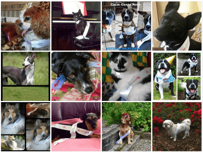 How Pet Sitters Ireland Reached Their Ideal Customers - Facebook Competition Case Study